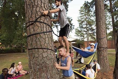 Students hanging hammocks on campus